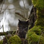 Location: Ridgefield National Wildlife Refuge, Washington 07 Feb 2021 -- life list #201